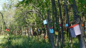 """""""Jelly Bean Suites"""" in South Hero, Vermont: some 600 colorful bird houses built to attract mosquito-eating tree swallows."""