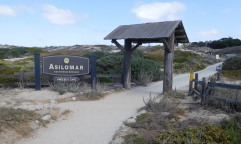 The Asilomar conference center and hotel lies just past these dunes. Close to both Monterey and Carmel and a short walk from the beach, it's a beautiful and relaxing place to stay.