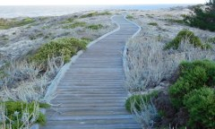 Boardwalks lead across the dunes from Asilomar to the beach and tide pools.
