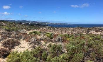 The bike path enters the coastal dunes as it leaves Monterey. From the top of this dune you can see Monterey and Pacific Grove in the distance across Monterey Bay.