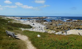 One last view of the tide pools at Asilomar State Beach . . .