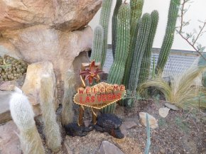 Watch for a few other displays outside the main exhibit. This vintage Las Vegas sign is in the Botanic Garden's desert plants display.