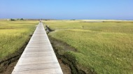 Boardwalk leading to the beach at Sandwich on Cape Cod, Massachusetts.