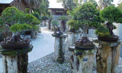The bonsai gallery.