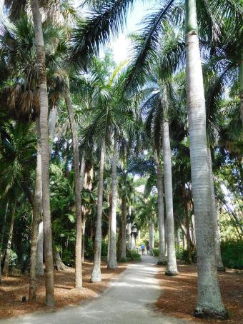 The royal palm grove.