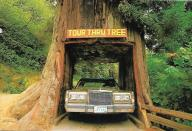For a toll of $5 you can still drive through this redwood tree near Klamath, California.