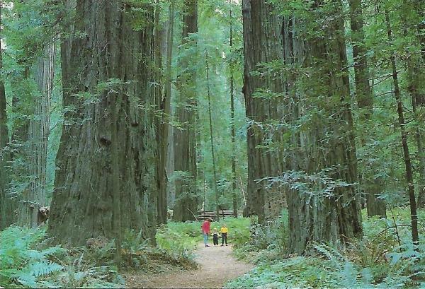Oregon 1998_07