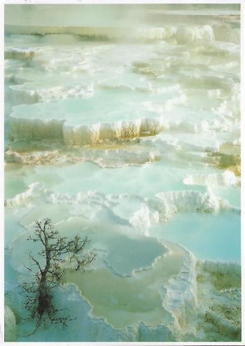 Mammoth Hot Springs, Yellowstone National Park, photo by Larry Ulrich.
