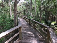 We were the only ones on the long boardwalk through the swamp at Haw Creek Preserve, west of Palm Coast, FL.